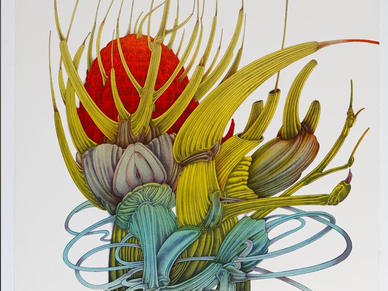 Alain le Foll - Maître de l'imaginaire : Alain Le Foll. Fleur d'Afrique, 1973. Lithographie, 78,6 x 56,6 cm (Collection particulière) © succession A. Le Foll © Mirela Popa