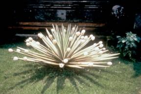 Nos meilleurs souvenirs. Expérience Pommery #8. : Michel François, Cactus, 1998, Courtesy de l'artiste, Galerie Gebauer, Galerie Jennifer Flay, photographie : Printemps de Septembre, 2000