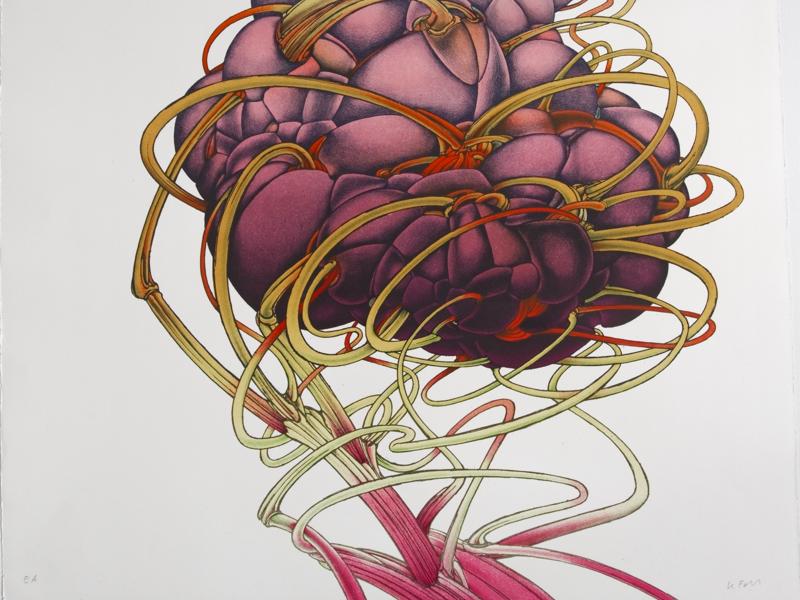 Alain le Foll - Maître de l'imaginaire : Alain Le Foll. Anatomie IV. Planche tirée de l'album Extrait du corps, 1971. Lithographie. 56,2 x 45,5 cm (Collection particulière) © succession A. Le Foll © Mirela Popa