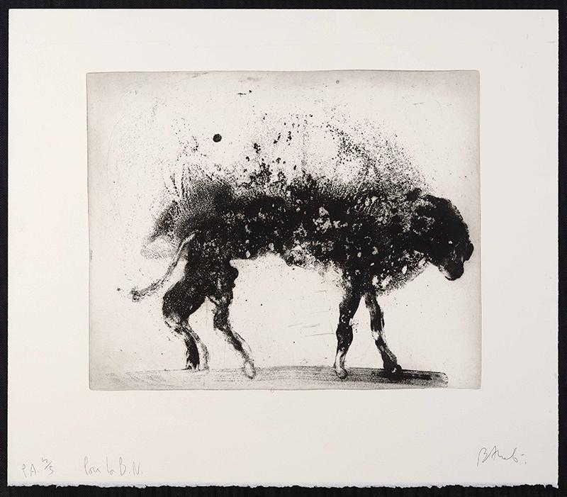 Miquel Barceló. Sol y sombra : Animal mouillé, LANZAROTE 8 - 1999. 65 x 75 cm. Eau-forte et aquatinte. © ADAGP, Paris, 2016. BnF, Estampes et photographie.