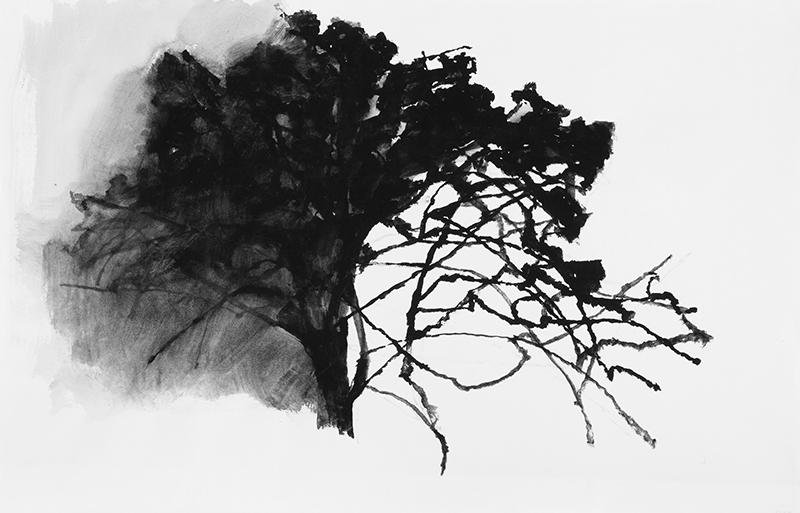 Alexandre Hollan. Je suis ce que je vois : Alexandre Hollan. Chêne de Rieusec. 2011, gouache. © Illés Sarkantyu