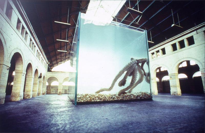 Le spectacle de la nature : Simone Decker, Jérémy, 1999 - 2000, cliché : Droits Réservés, Œuvre de la collection du Frac des Pays de la Loire