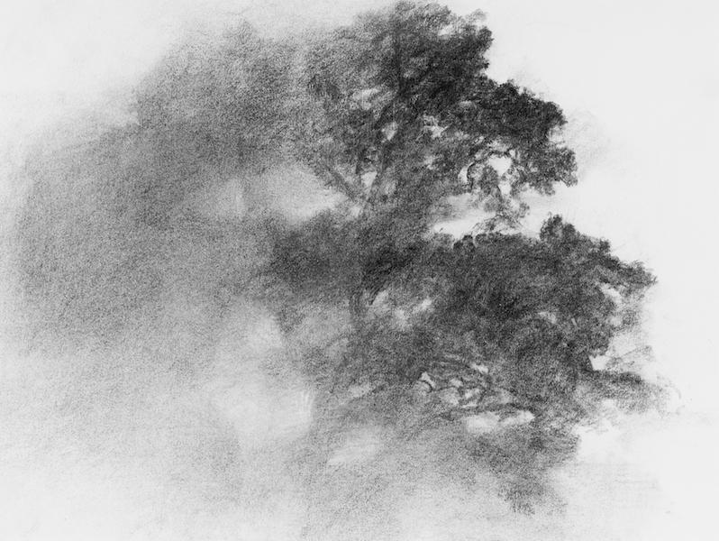 Des arbres en hiver : Oiseau des vignes, fusain, 50x65 cm, 2016 Wintertime  © Alexandre Hollan