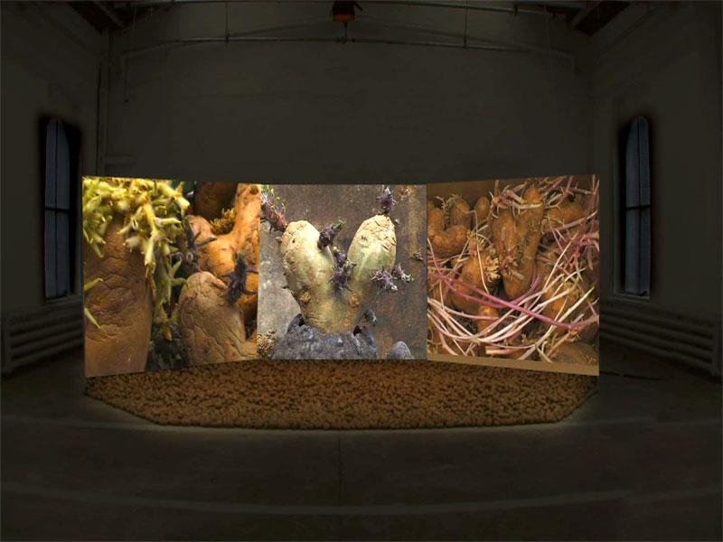 Agnès Varda - Y'a pas que la mer : Patatutopia, 2003, 3 films vidéo et 700 kilos de patates au sol