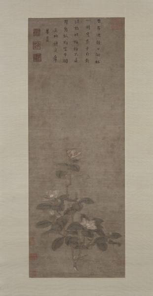 Le thé à Guimet : histoires d'une boisson millénaire : Branche de théier impérial en fleur Qian Xuan (c. 1235 – 1301) Peinture sur soie, encre et couleurs Chine, époque Yuan (1279 – 1368) H. 79cm ; L. 29,4cm MA 6994 (C) RMN-Grand Palais (musée Guimet, Paris) / Thierry Ollivier