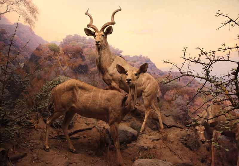 Exposition des Artistes de la cité internationale des Arts : Pauline Vachon - Série Zoo