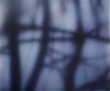 Une spiritualité au féminin : Carole Benzaken, Strange Fruit 3, 2011, dessin inclus dans un verre feuilleté, 100 x 120 cm © Carole Benzaken - ADAGP, Paris 2013