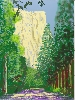 David Hockney : David Hockney Yosemite II, October 16th 2011, 2011 iPad drawing printed on four sheets of paper, mounted on four sheets of Dibond.  Edition of 12  235,5 x 177 cm
