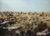 Jean-Marc Cerino. Comme une brise d'accalmie. : Dessouchement aux explosifs, 1920, 2014 huile sur verre, huile et peinture synthétique à la bombe sous verre 117 x 159 cm © Marc Noirce