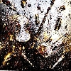 Laurent Konqui : Laurent Konqui. Moz'art Black and Gold. Technique mixte. Violon, tubes et pinceaux sur toile. Peintures à l'huile et pigments. 100*100 cm. Courtesy de l'artiste.