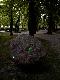 Erik Samakh - Chez Rodin